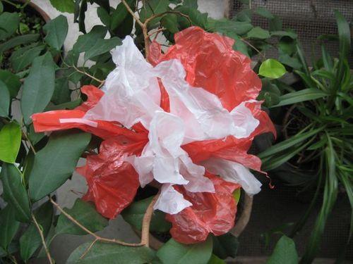 Fleur rouge et blanche