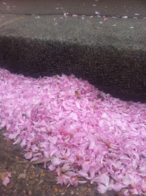 Pétales de fleurs trottoir
