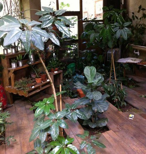 Plantes placher