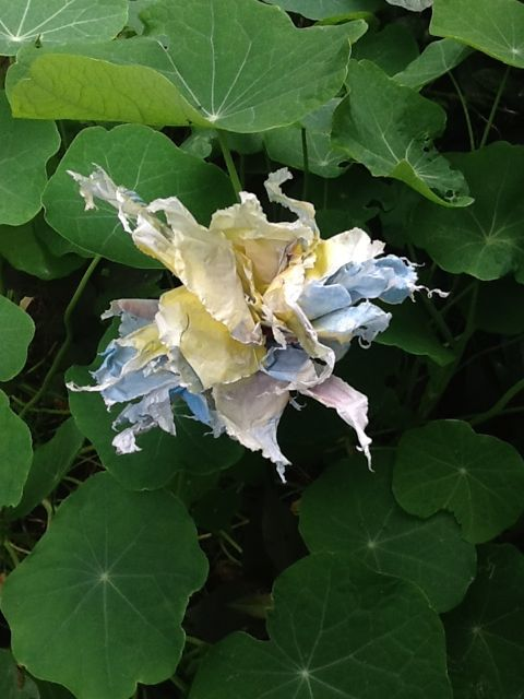 Fleur plastic dans la nature